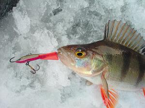 Зимняя рыбалка. Как ловить на балансир?